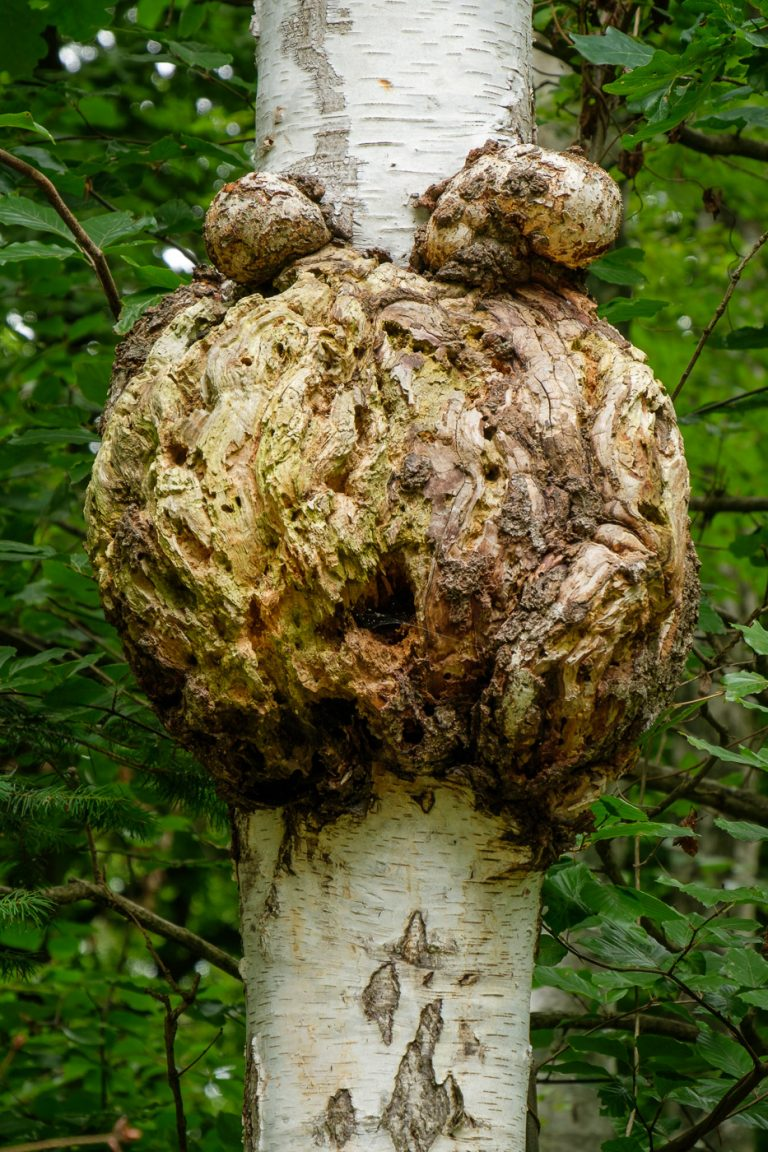 Kermit de boomkikker