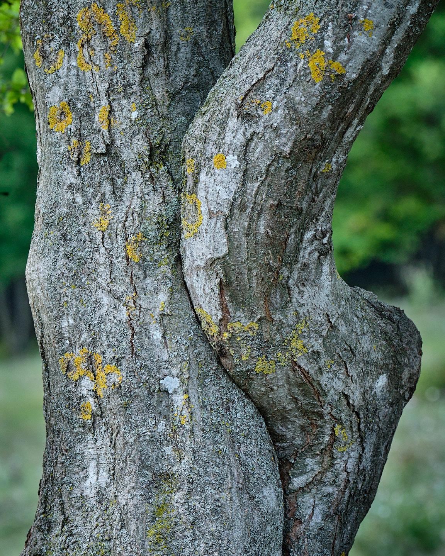 Knuffelende bomen